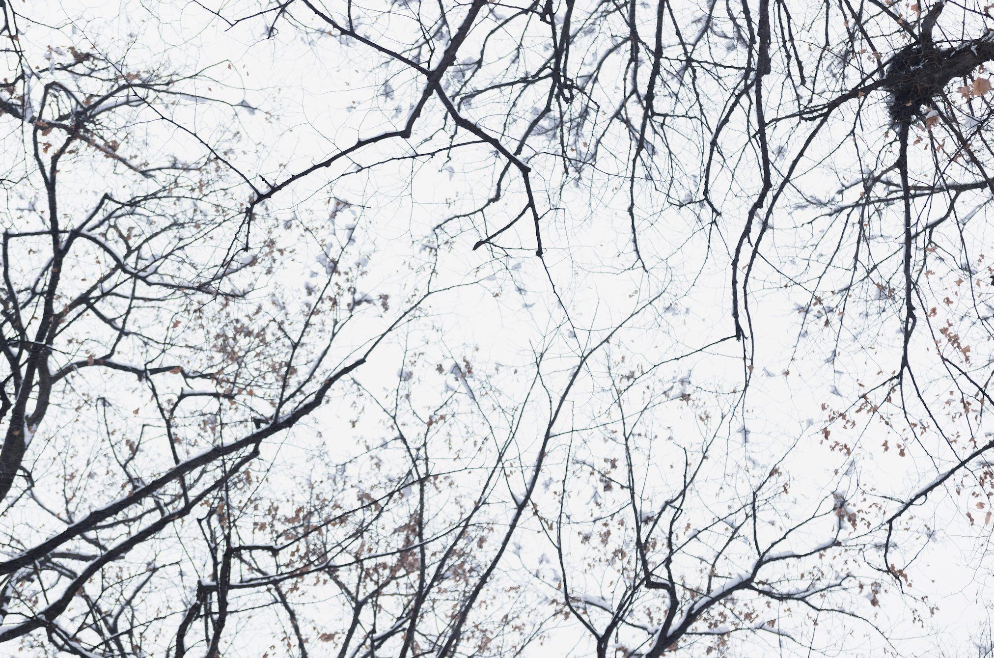 Chiesto il nulla osta a dieci comuni per abbattimento alberi in seguito a censimento
